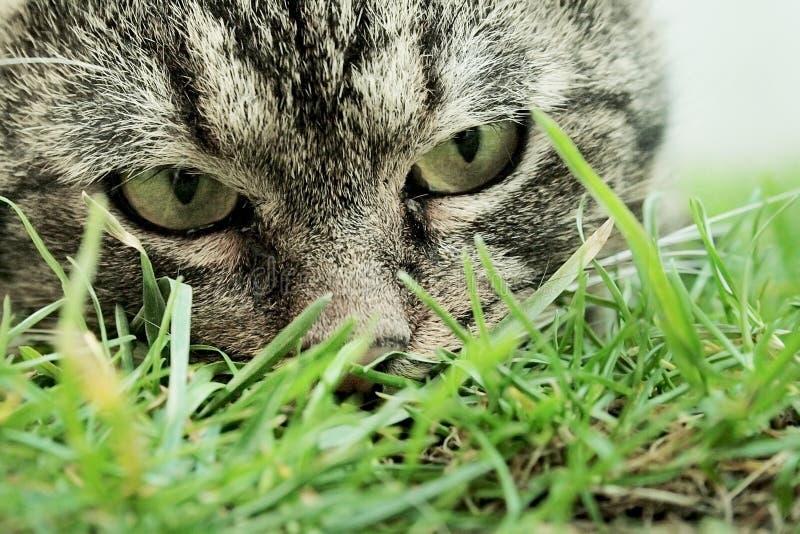 kot przygląda się myśliwego s fotografia stock