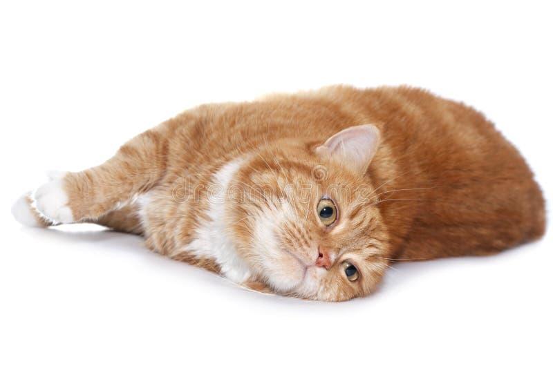 kot przygląda się pomarańczową czerwień zdjęcia stock