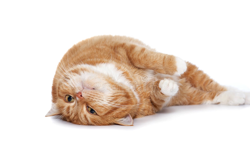 kot przygląda się pomarańczową czerwień fotografia stock