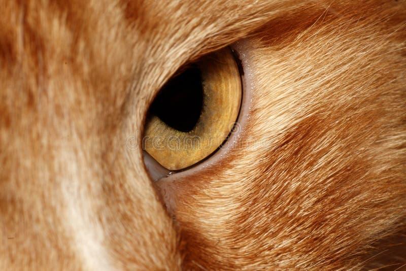 kot przygląda się s obraz royalty free