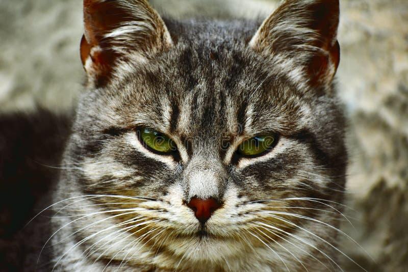 Kot przygotowywający dla tropić zdjęcie stock