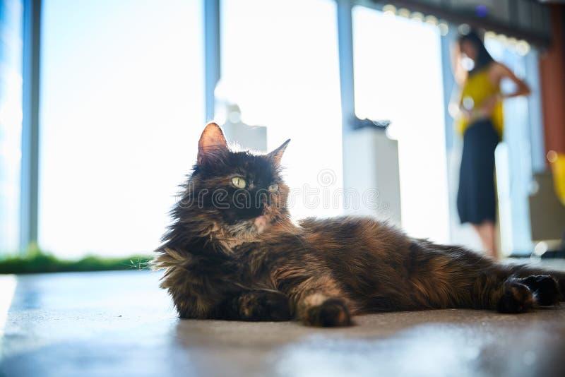 Kot relaksuje kłamstwa na podłodze wśród opatrunkowej dziewczyny fotografia stock