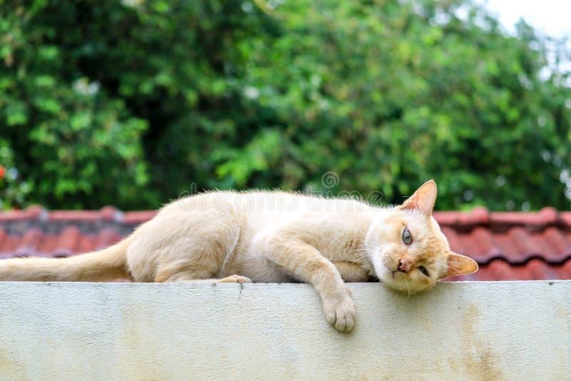 kot relaksuje na betonowej ścianie ralaxing dachowego ogródu tło fotografia stock