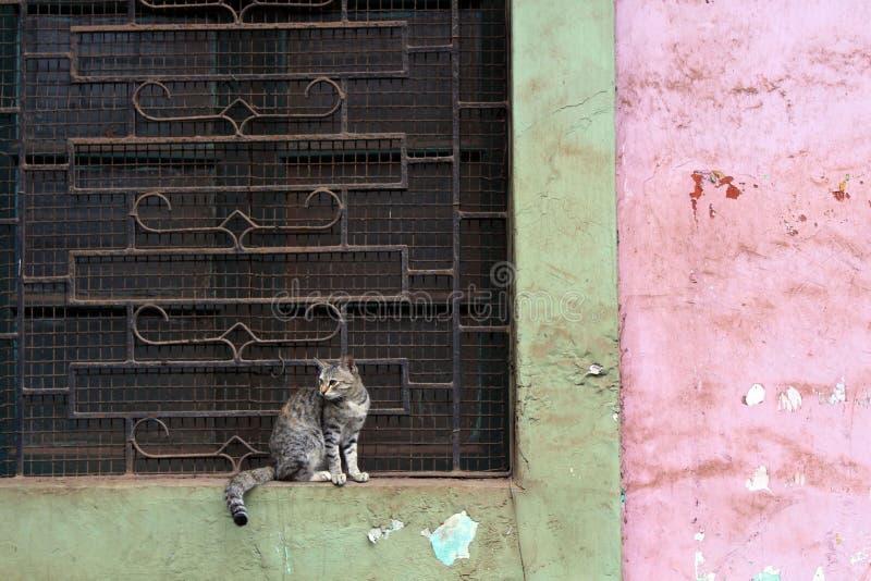 Kot robi nic wokoło drzwi w Goa starym miasteczku zdjęcia royalty free