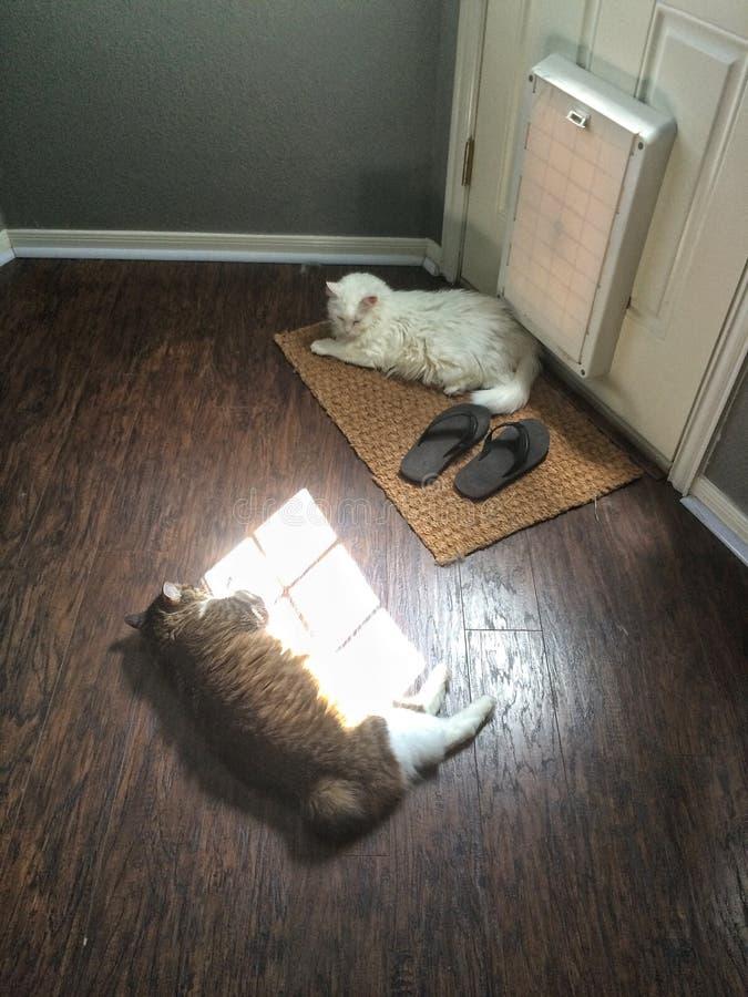 Kot rozmowy zdjęcie royalty free
