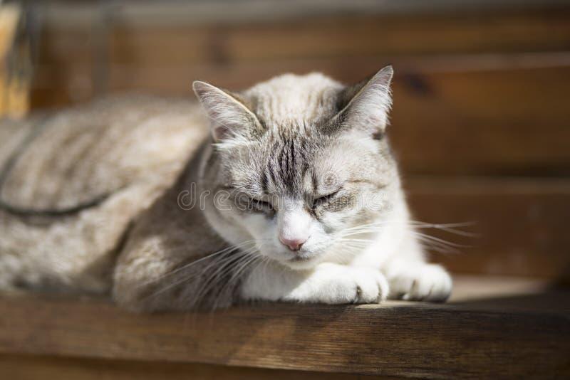 Kot, kot, słoneczny dzień/pogodny, szczęśliwy/ fotografia royalty free