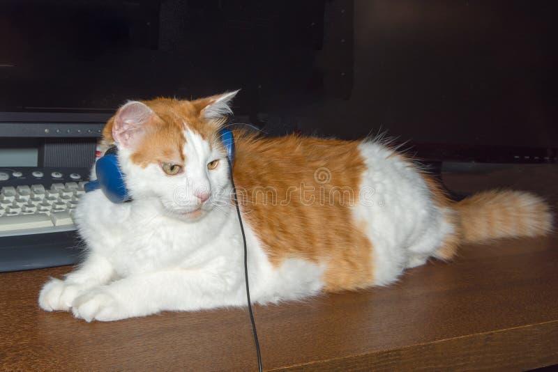 Kot s?ucha muzyka w he?mofonach zdjęcie royalty free