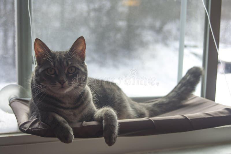 kot się odprężyć obrazy stock