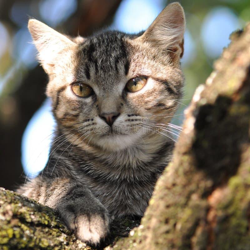 kot się odprężyć obrazy royalty free