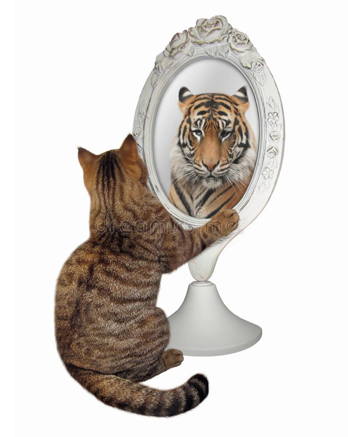 Kot siedzi i spojrzenia w lustrze zdjęcia royalty free