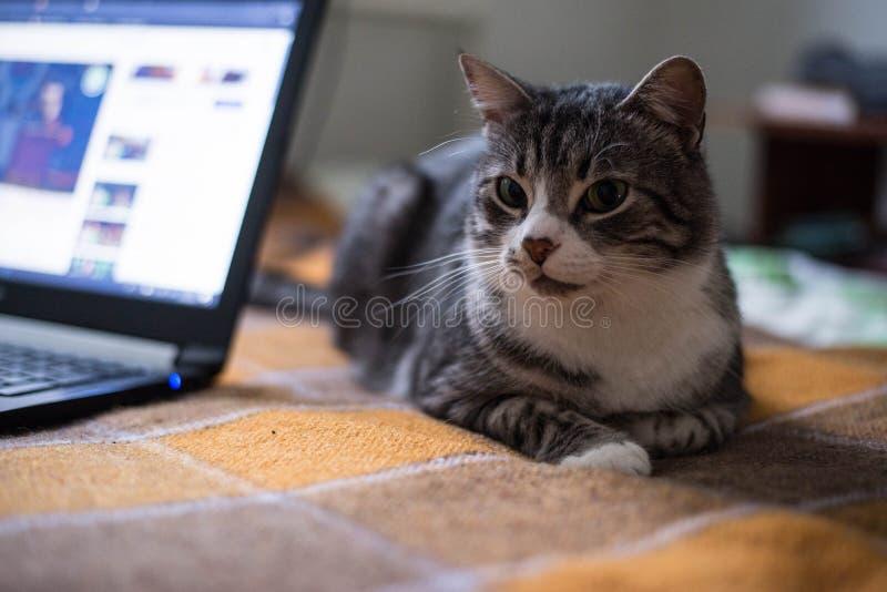 Kot siedzi na łóżku fotografia stock