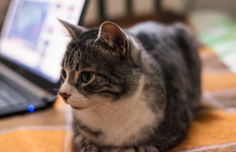 Kot siedzi na łóżku obraz stock
