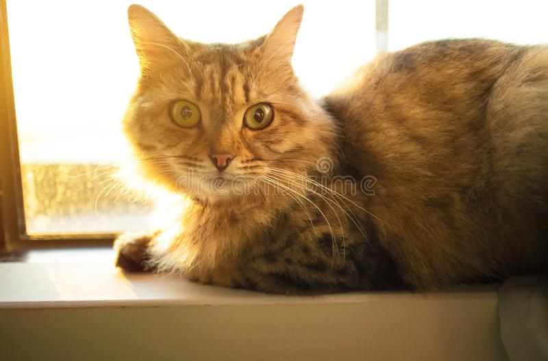 Kot siedzi na nadokiennym parapecie obraz royalty free