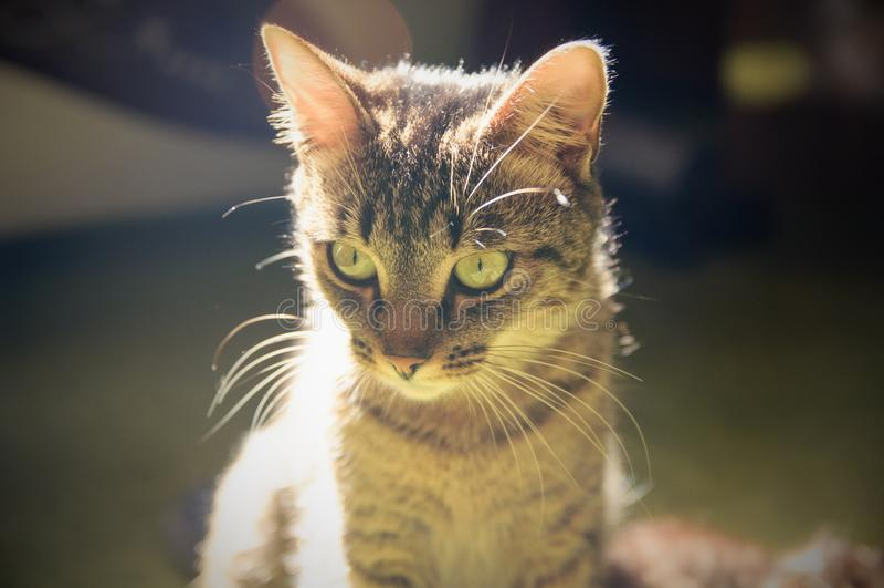 Kot siedzi na okno zdjęcie stock