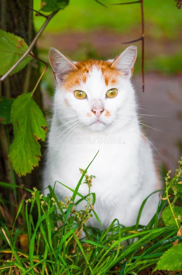 Kot siedzi w czerwonym jagod i jesień liści ulistnieniu zdjęcia stock