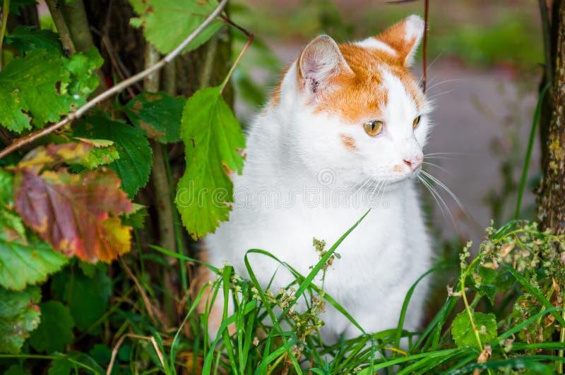 Kot siedzi w czerwonym jagod i jesień liści ulistnieniu obraz stock