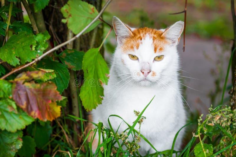 Kot siedzi w liścia ulistnieniu zdjęcia stock