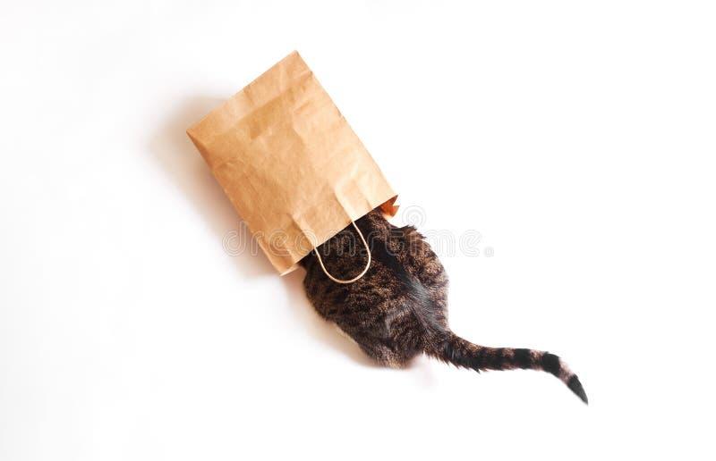 Kot siedzi w papierowego rzemiosła pakunku Pojęcie używać environm obraz stock
