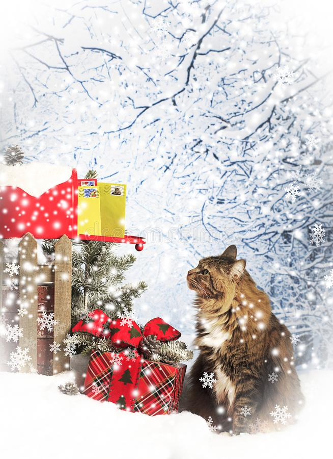 Kot Sprawdza skrzynkę pocztowa dla kartek bożonarodzeniowa zdjęcia stock