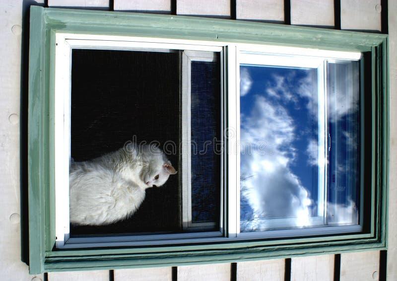 - kot starego, ekranizującego okno białego royalty ilustracja