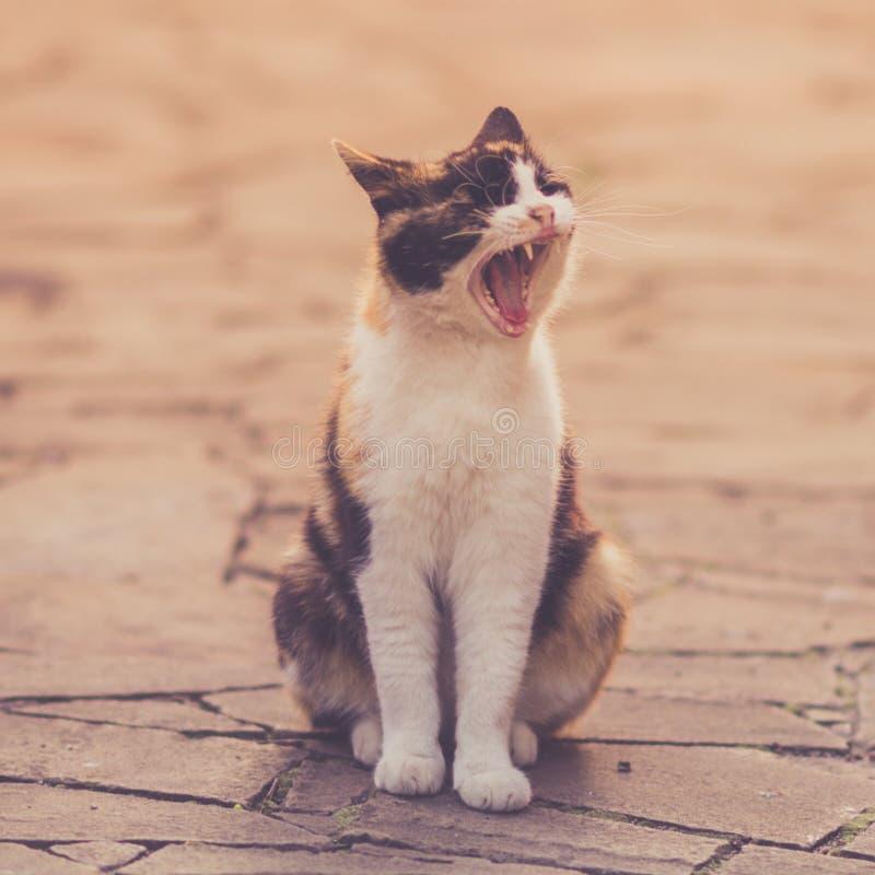 Kot szeroko ziewa obsiadanie na podłodze dziki kamień w lato jardzie obraz royalty free