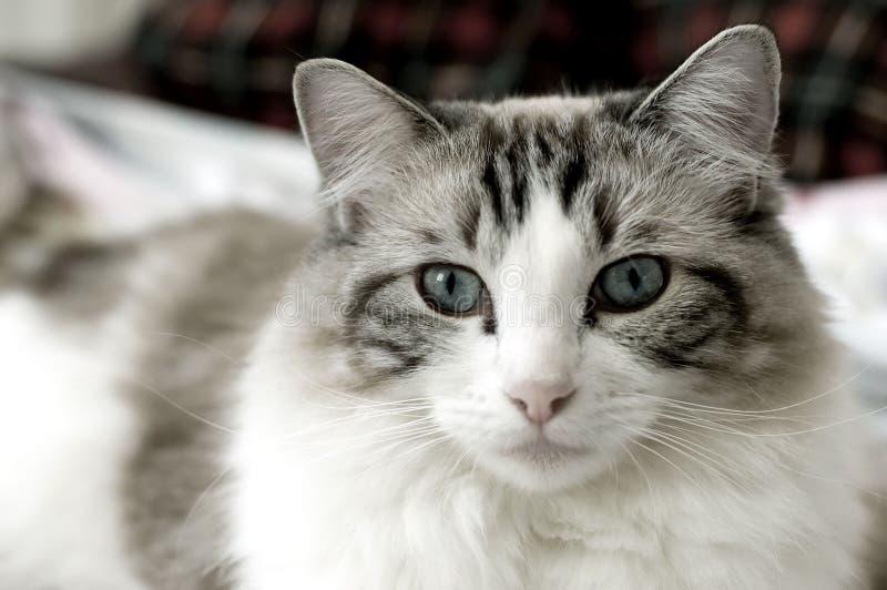 kot szmatę lalki fotografia royalty free