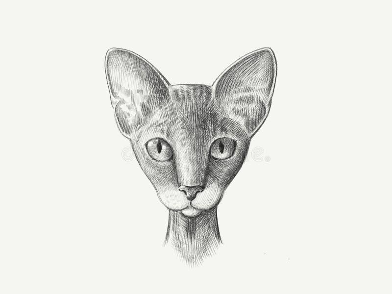 kot traken sfinks głowa jest symetrycznych nakreślenie grafika czarny i biały ilustracją royalty ilustracja