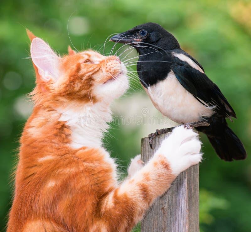 Kot tropił ptaka obrazy royalty free