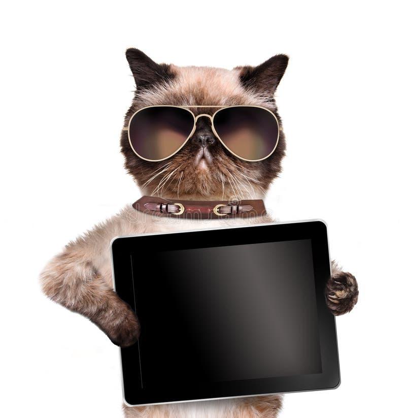Kot trzyma pastylkę obraz royalty free