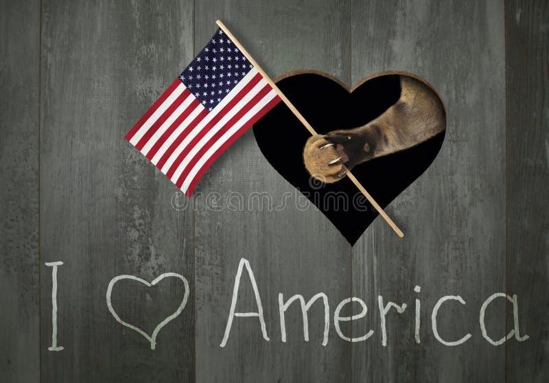 Kot trzyma USA flagę zdjęcia stock