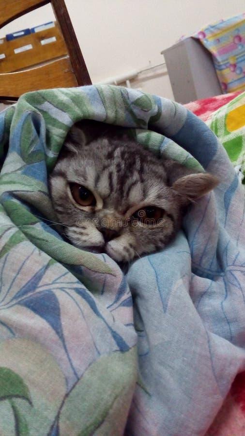 Kot w łóżku jest w ten sposób jednakowy właściciel obraz royalty free