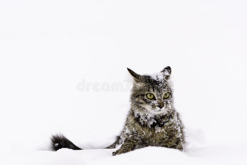 Kot w śniegu fotografia stock