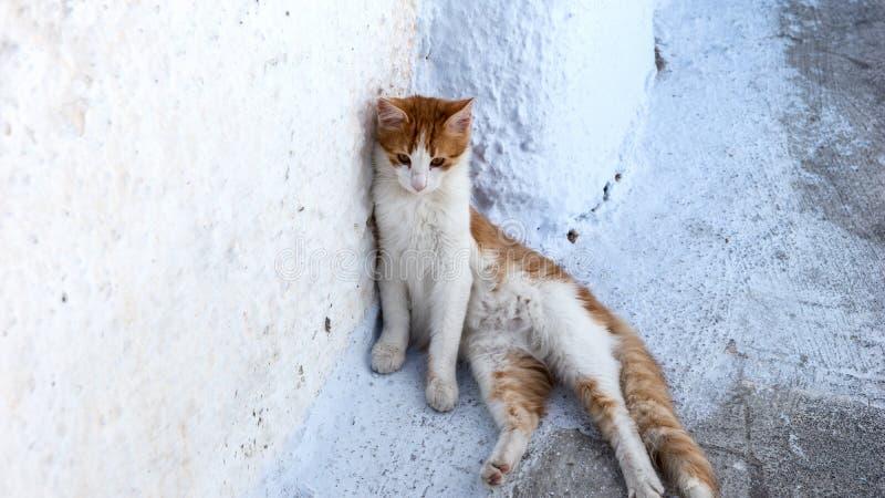 Kot w alei miejsce Oia w Santorini fotografia royalty free