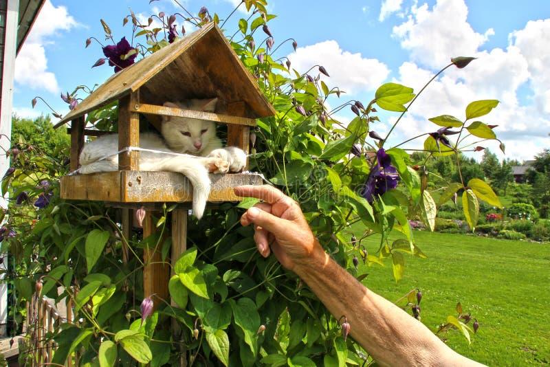 Kot w birdhouse obraz royalty free