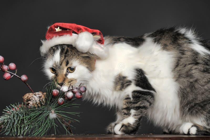 Kot w Bożenarodzeniowym kapeluszu obraz royalty free