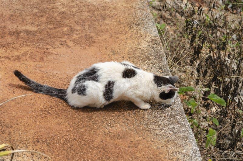 Kot W czekaniu zdjęcie royalty free