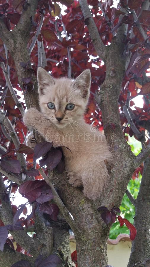 Kot w drzewie 3 fotografia stock