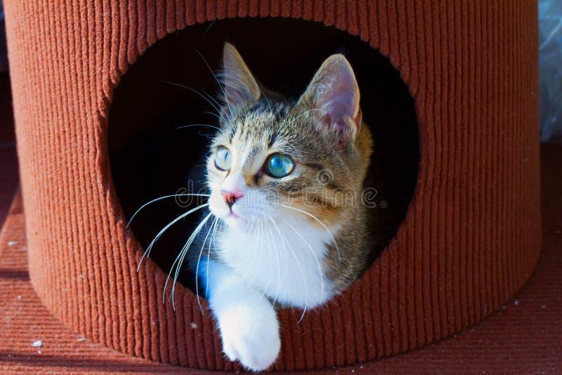 Kot w dziurze zdjęcie stock