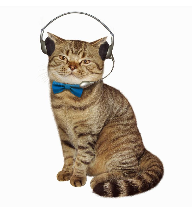 Kot w hełmofonach z mic fotografia royalty free