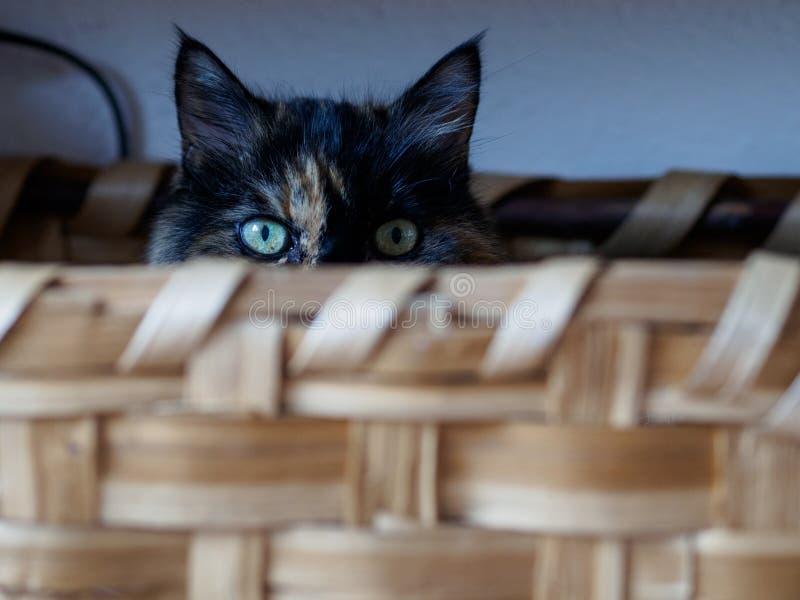 Kot w koszu w Mediolan fotografia royalty free