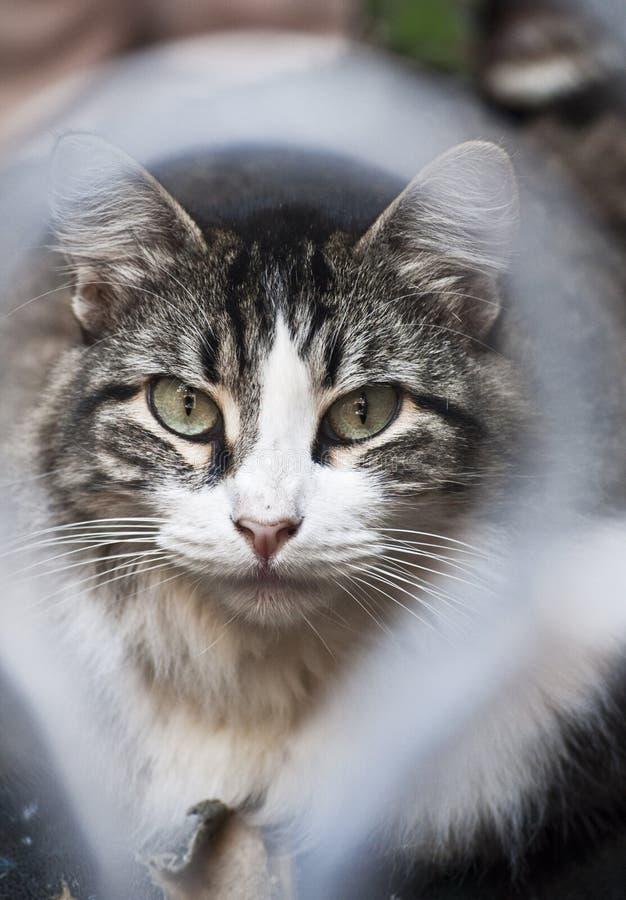 Kot w Kuba obrazy royalty free