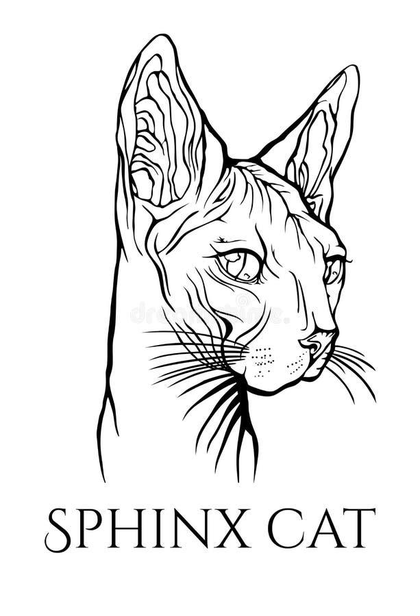 12 kot?w kuzia o portret senior y szczotkarski w?giel drzewny rysunek rysuj?cy r?ki ilustracyjny ilustrator jak spojrzenie robi p ilustracji