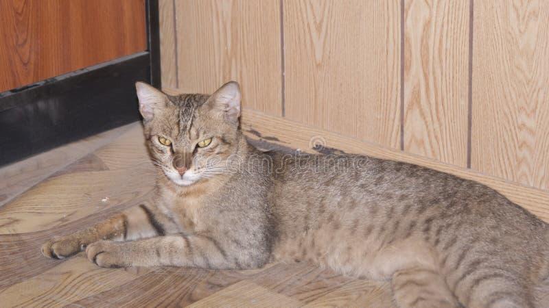 Kot w mój miejsca biurze fotografia stock