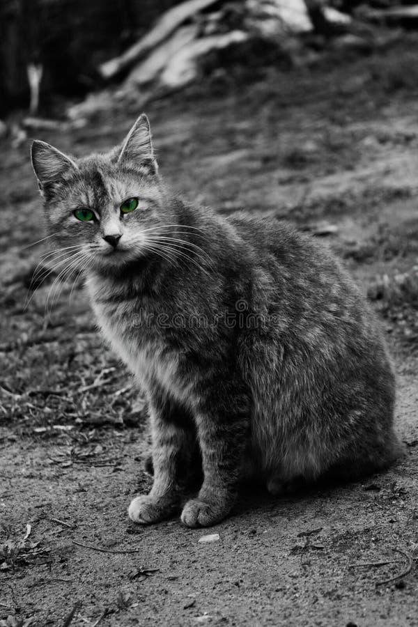 Kot?w oczy obrazy stock