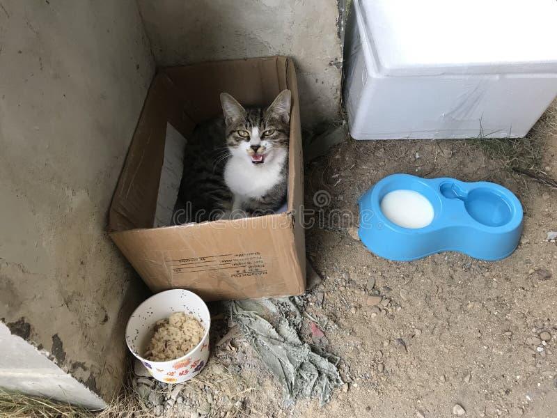 Kot w pudełku obraz stock