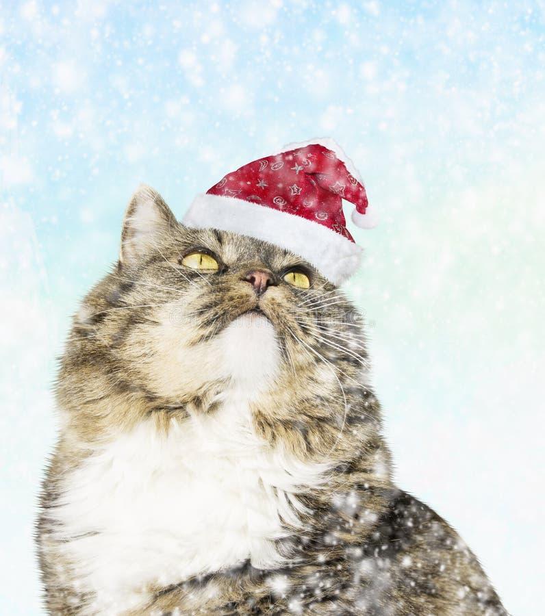 Kot w Santa kapeluszu pod śniegiem zdjęcie stock