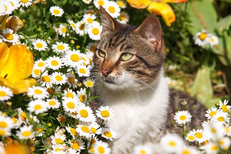 Kot w stokrotkach obraz stock