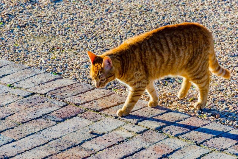 Kot W The Sun 2 zdjęcie royalty free