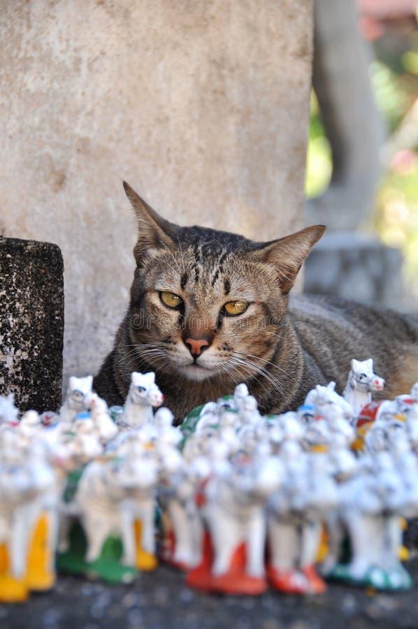 Kot w tajlandzkiej świątyni obraz stock
