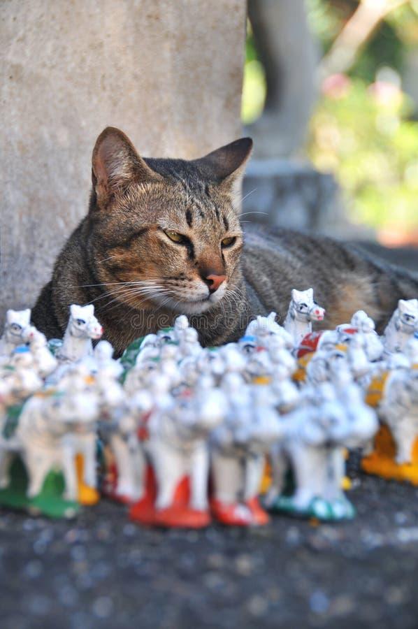 Kot w tajlandzkiej świątyni obrazy royalty free